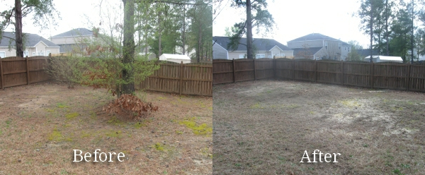Charming Tree Removal In Columbia SC Before And After